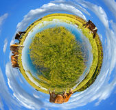 Little planet panorama — 图库照片