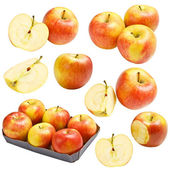 Apple collection — Stock Photo