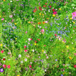 Stock Photo: Wild flowers