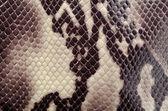 Aranzel de pele de cobra — Fotografia Stock