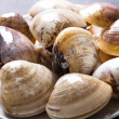 Stock Photo: Raw clams