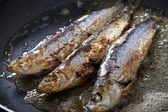 Frying sardines in pan — Stock Photo