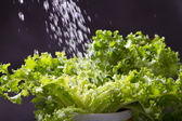 Water splashing on green lettuces — Stock Photo