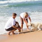 coppia invecchiato centrale giocando con il cane di famiglia — Foto Stock