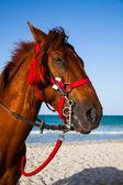 Horse head portrait — Stock Photo