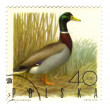 POLAND - CIRCA 1970: a stamp printed in Poland, shows duck, circ — Stock Photo