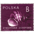 POLAND - CIRCA 1990: A stamp printed in POLAND shows snail, circ — Zdjęcie stockowe
