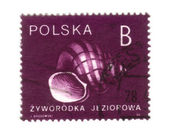POLAND - CIRCA 1990: A stamp printed in POLAND shows snail, circ — Stock Photo