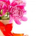 Pink peony — Stock Photo #10745998
