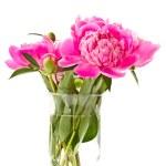 Pink peony — Stock Photo #10746053