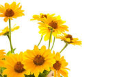 Yellow daisies — Stock Photo