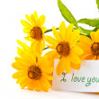 Yellow daisies - Stock Photo