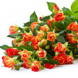 Bouquet of red roses — Stock Photo #11895600