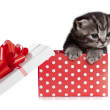 Funny baby cat in red gift box — Stock Photo #11316984