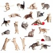 Funny British kittens collection isolated on white — Stock Photo #11783162
