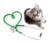 Veterinary for pets concept — Stock Photo