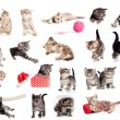 Funny British kittens collection isolated on white — Stock Photo