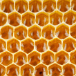 Bee honey in honeycomb macro — Photo