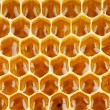 Bee honey in honeycomb macro — Stockfoto