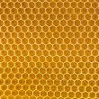 Bee honey in honeycomb — Stockfoto