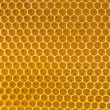 Bee honey in honeycomb - Stock Photo