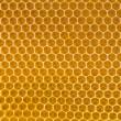 Bee honey in honeycomb — Stock Photo