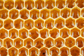Bee honey in honeycomb macro — Stock Photo