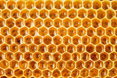 Bee honey in honeycomb closeup — Stock Photo