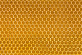 Bihonung i honeycomb — Stockfoto
