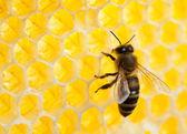 пчелы в соты крупным планом — Стоковое фото