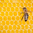 Bee in honeycomb macro — Stock Photo