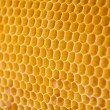 Bee honey in honeycomb angle view — Foto Stock