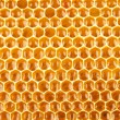 Honeycomb full of honey closeup — Foto Stock