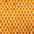 Honeycomb full of honey closeup — Stock Photo