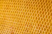 蜜蜂的蜂蜜蜂窝角度视图中 — 图库照片