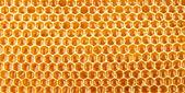 Favo de mel cheia de mel closeup — Fotografia Stock