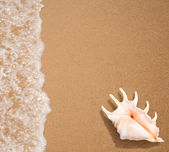 Seashell top view on sea surf edge — Stock Photo