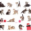 Adorable kittens collection. Little funny cats isolated on white — Stock Photo #12403131