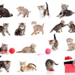 Adorable kittens collection. Little funny cats isolated on white - Stock Photo