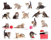 Adorable kittens collection. Little funny cats isolated on white — Stock Photo