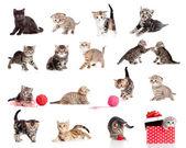Colección adorable gatitos. gatos graciosos poco aislados en blanco — Foto de Stock