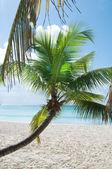 Fantastisk tropisk strand på halvön på samana i Dominikanska Republiken — Stockfoto