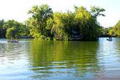 Pond in park — Stock Photo
