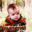 Cute 4-month old baby in the basket outdoor — Stok fotoğraf