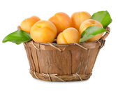 Apricots in a basket isolated — Stock Photo