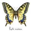 Butterfly Papillo Machaon. Watercolor imitation. — Stock Vector