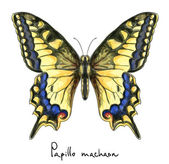 Butterfly Papillo Machaon. Watercolor imitation. — Stockvektor