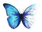 Vlinder morpho anaxibia. onvoltooide aquarel tekening imitat — Stockvector