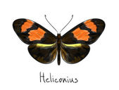 Butterfly Heliconius. Watercolor imitation. — Stock Vector