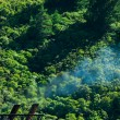Climate gas pollution concept, smoke and forest — Stock Photo